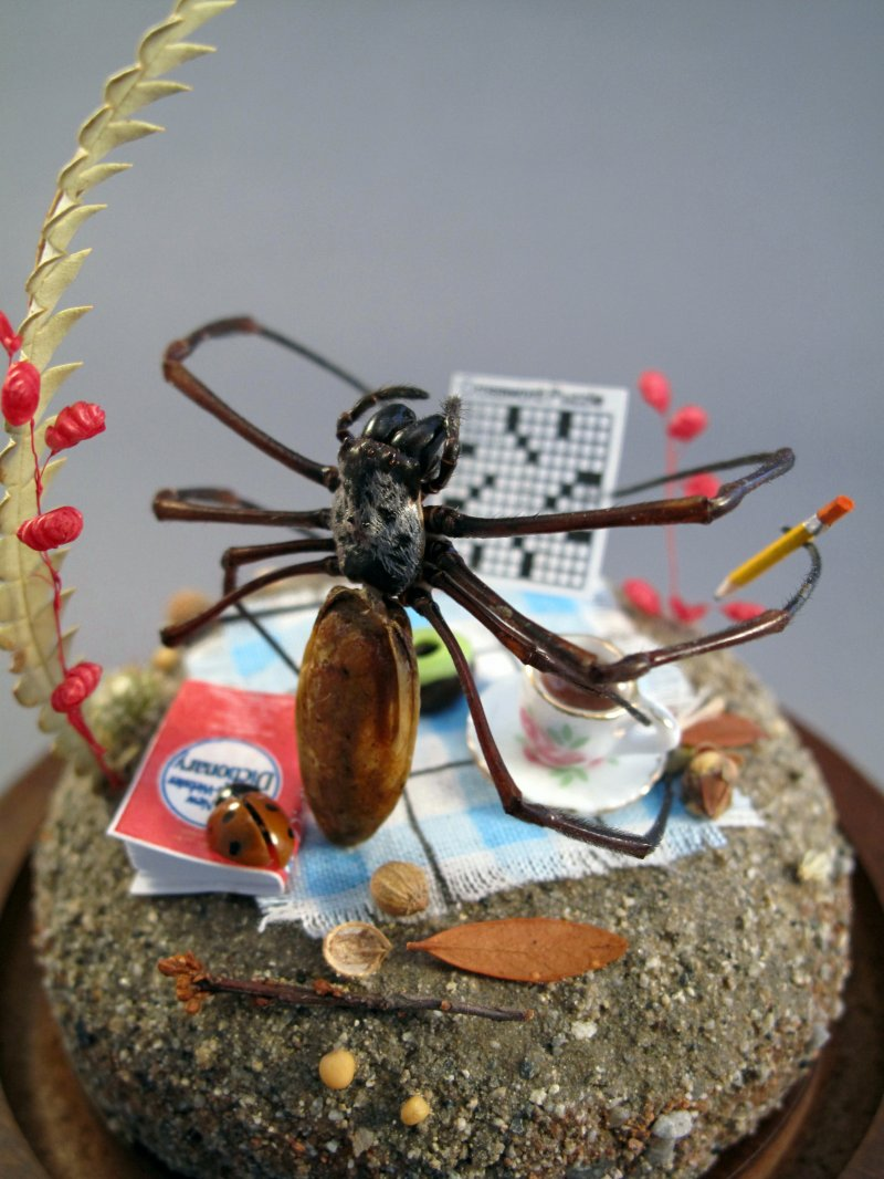 Spider Diorama by Lisa Wood