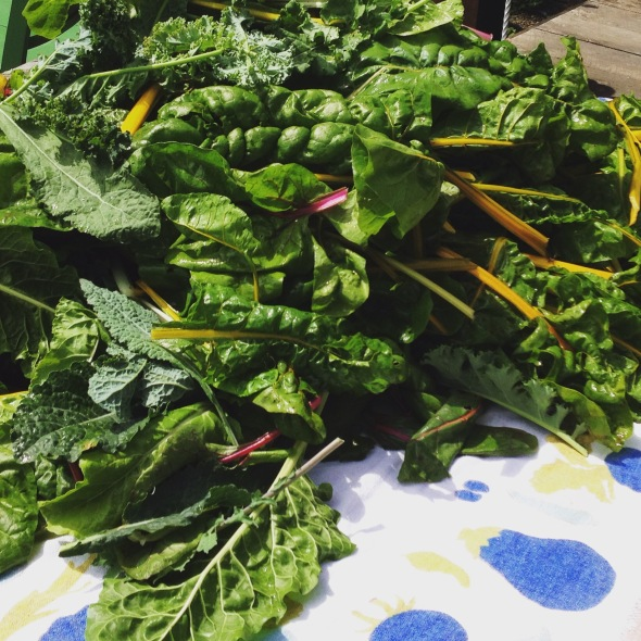 Kale, chard and silver beats for food outreach.
